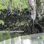 Two new publications on the value of mangroves